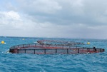 Offshore fishcage